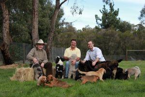 three generations of dog breeding